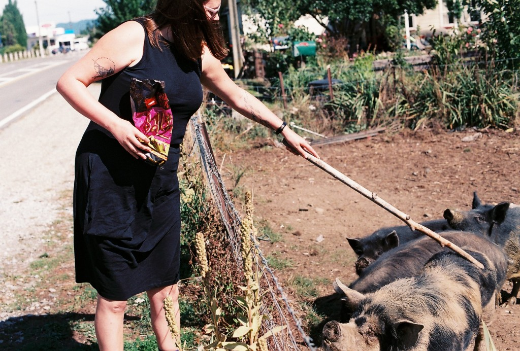 NZ pig scratch